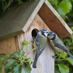 Two birds looking into a bird box. If a bird box has been successful on a ward, why not provide some bird books?