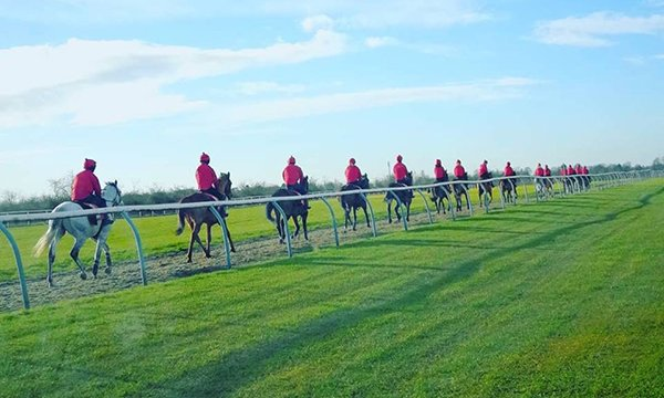 Picture shows a line of horses and riders alongside a fence, the green of the racing course contrasting with a clear blue sky. Nurse Sharon Mott is responsible for the health and well-being of young would-be jockeys and grooms at a horse racing school.