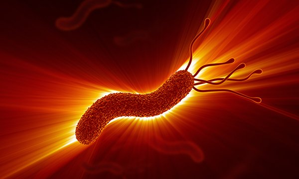 Helicobacter pylori: nurses' perceptions of diagnosis and treatment in adults